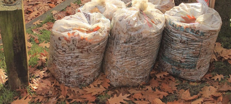 Yard Waste Cleanup Dos and Don'ts